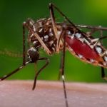 First Human Case of West Nile Virus in 2018 Confirmed!