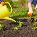 Weekly Health Tip: Garden Safely